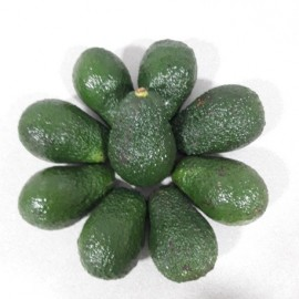 AGUACATES HASS.